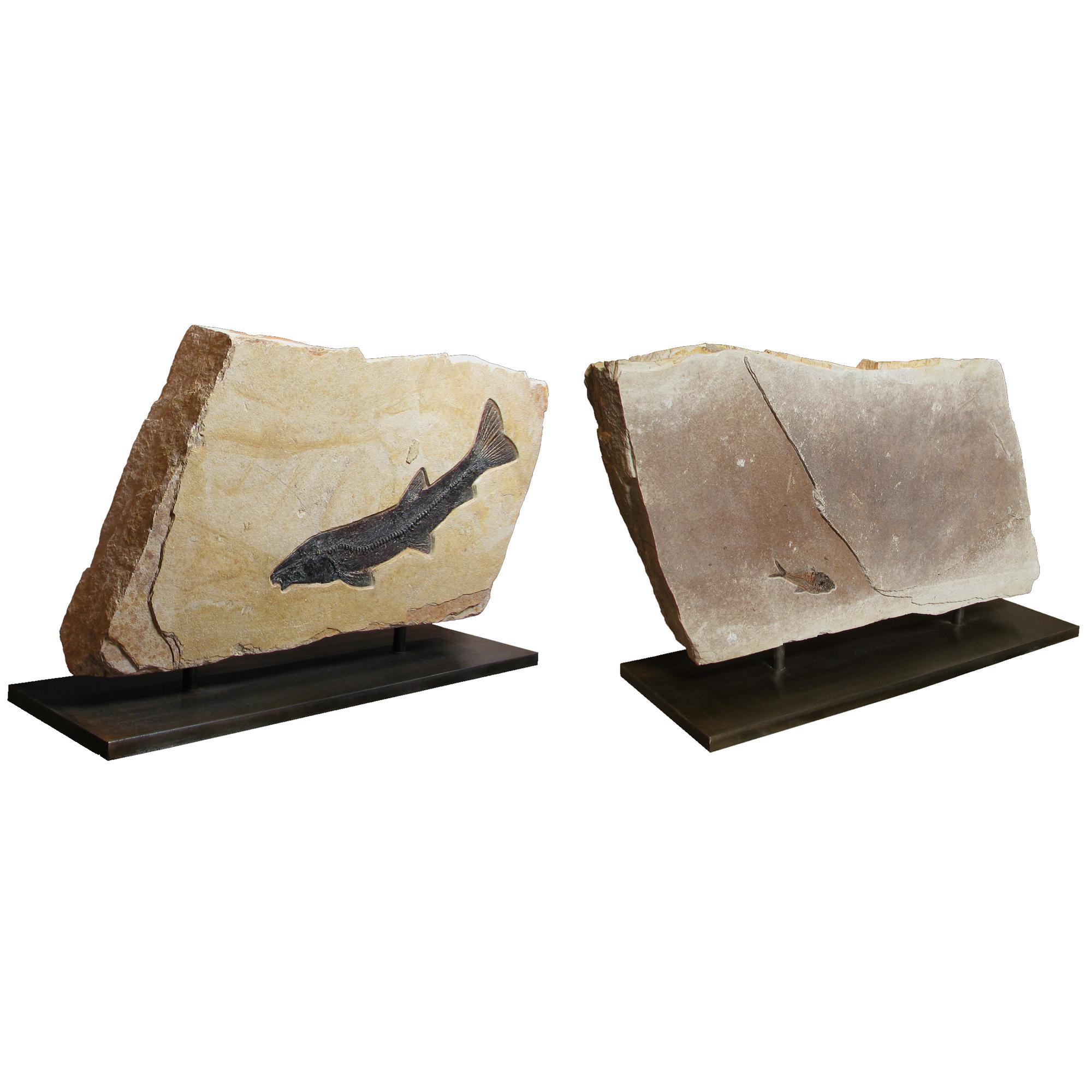Fossil Sculpture 02_120119300s