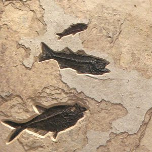 Fossil Gallery Mural 02_120905700gm