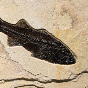 Fossil Sculpture 02_140922364 Sculpture