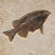 Fossil Sculpture 02_150105020 Sculpture 2