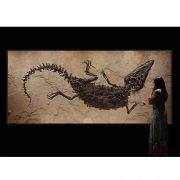 Crocodile Fossil Mural 2