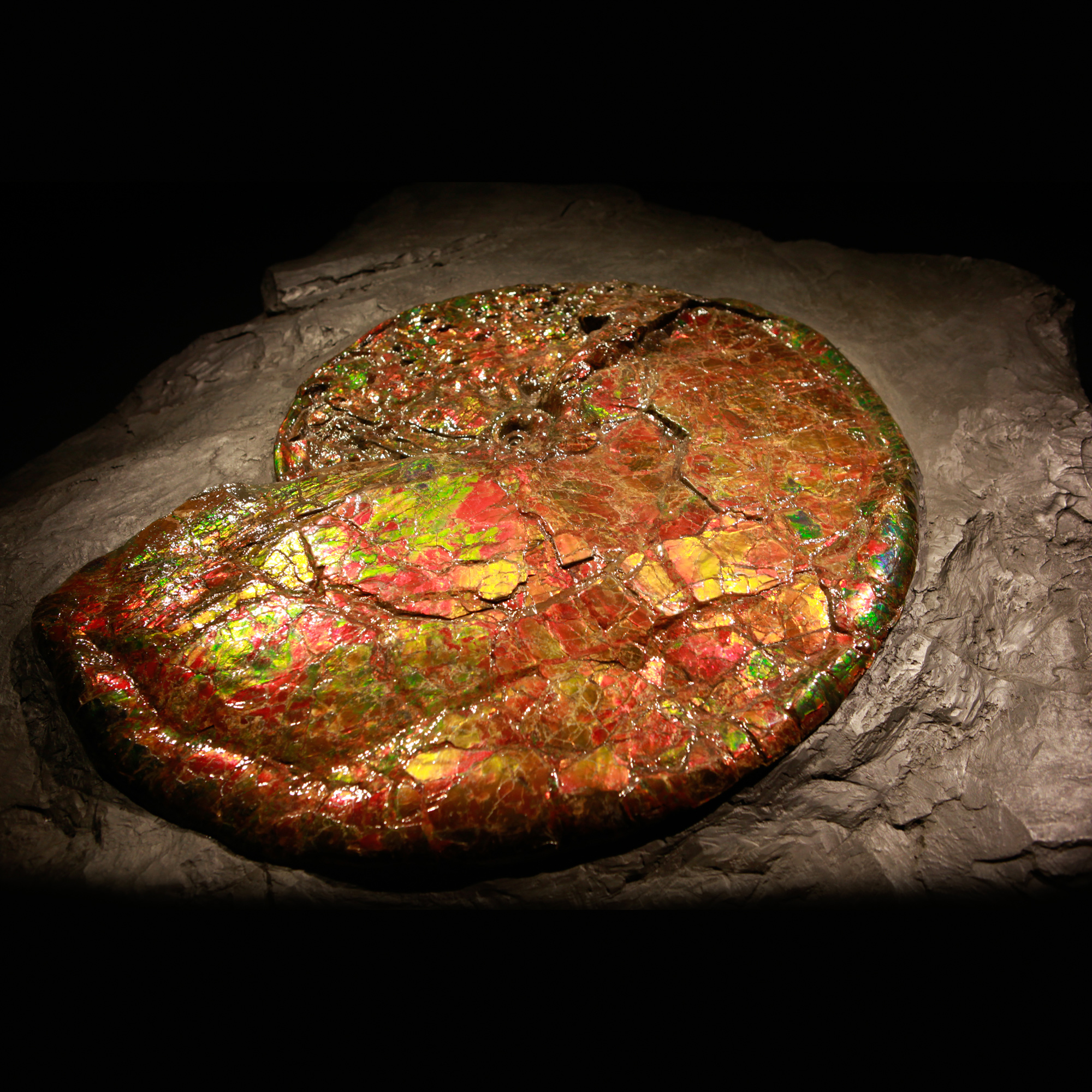Canadian Ammonite 02_CF17_961