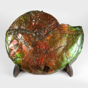 Canadian Ammonite 02 CF94 974