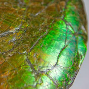 Canadian Ammonite 02 CF94 974