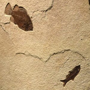 Fossil Sculpture 02_140521400 Sculpture
