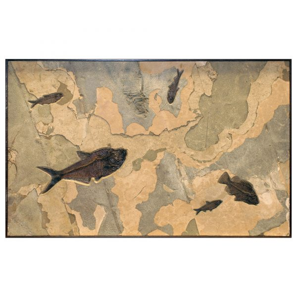 Fossil Collector Mural Q070626014cm