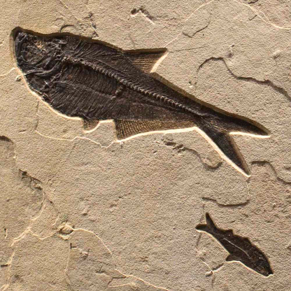 Fossil Collector Mural 02_Q100701012cm