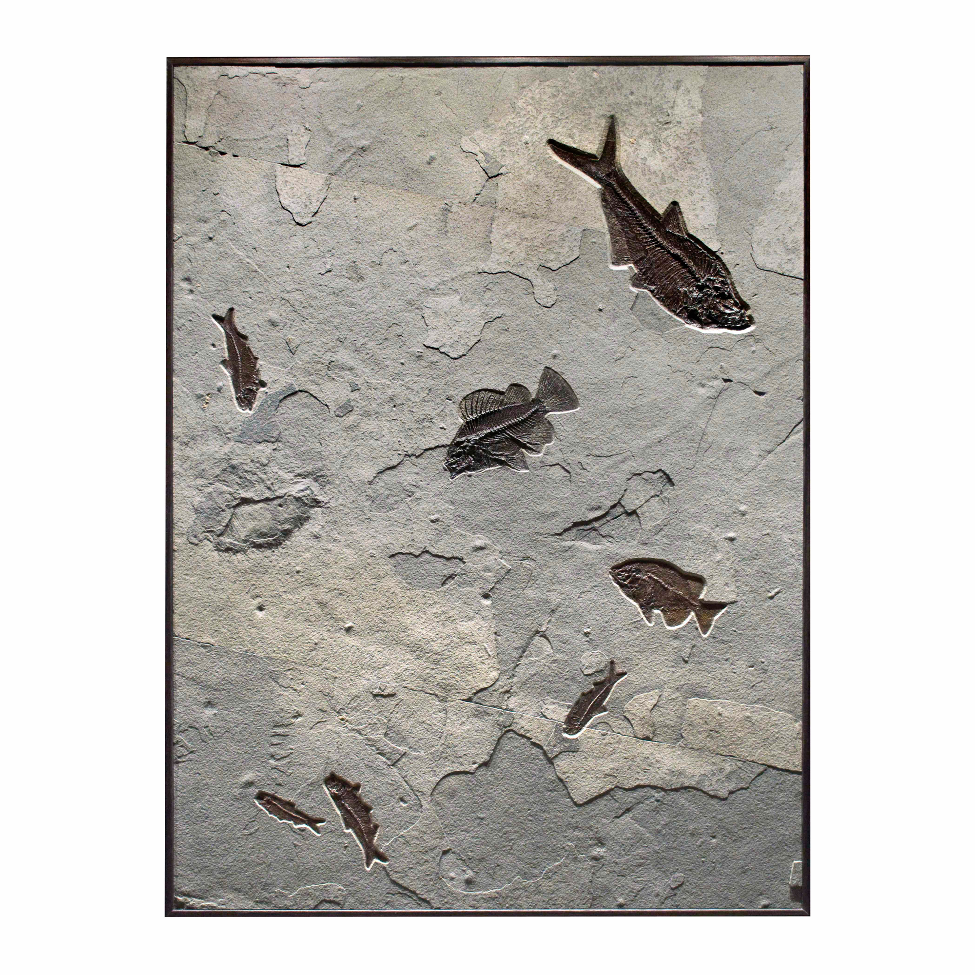 Fossil Collector Mural 02_Q100831010cm