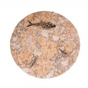 Fossil Coffee Table (Round) 150331001tc 2