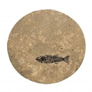 Fossil Stone Drink Table (Round) 170111318t 2
