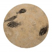 Fossil Stone Drink Table (Round) 170213362t 2
