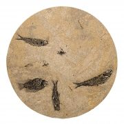 Fossil Stone Drink Table (Round) 170213508t 2