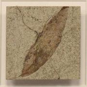 Fossil Shadow Box 171004612 3