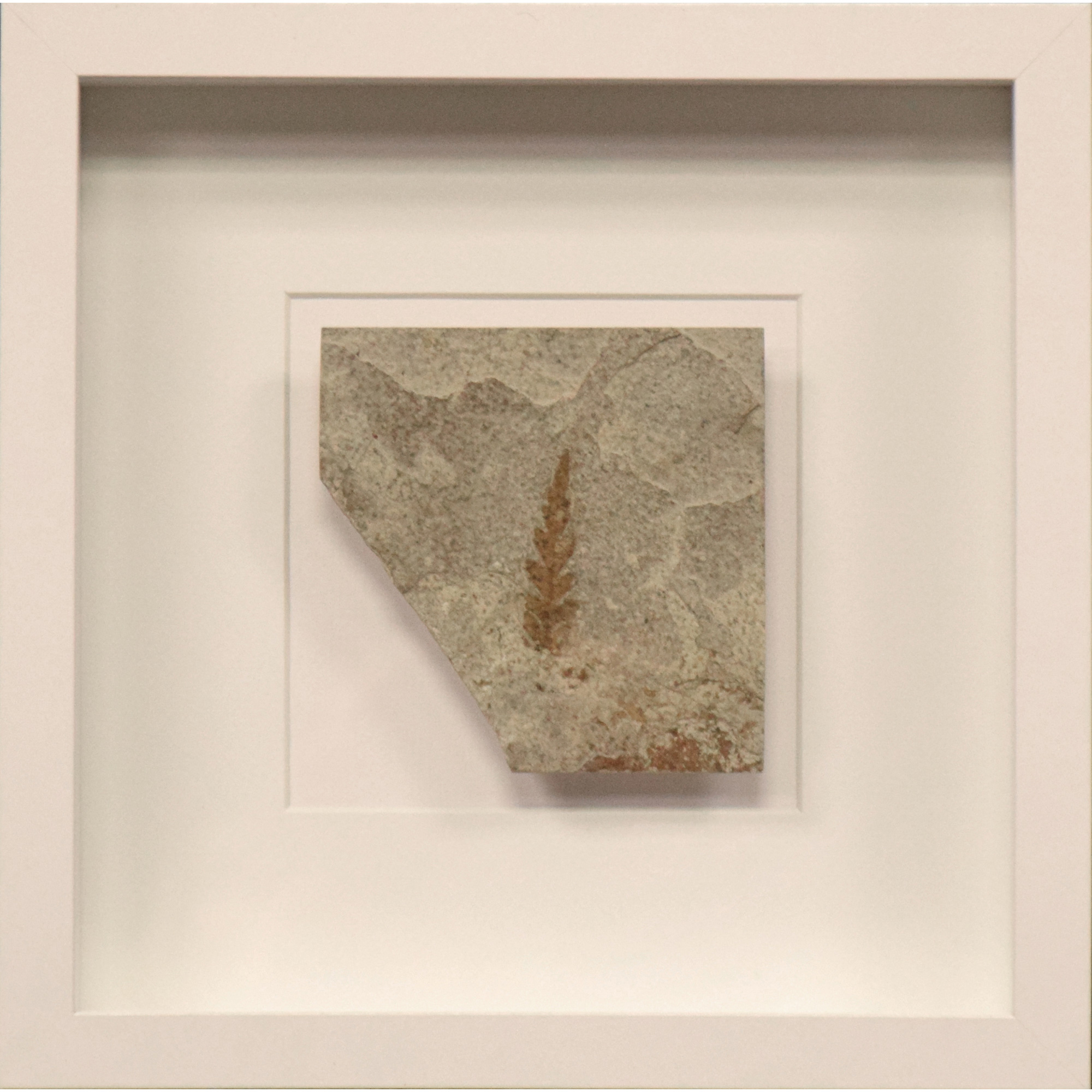 Fossil Shadow Box 171004614
