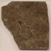 Fossil Shadow Box 171004628 3