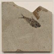Fossil Shadow Box 171004629 3