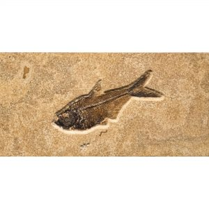 Fossil Tile (Combination) DL48_S212