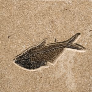 Fossil Tile (Combination) DL66_S220