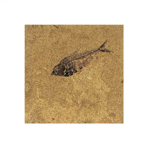 Fossil Tile (Honed) DL88_H065