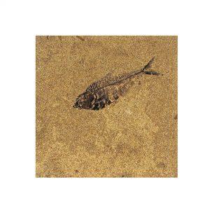 Fossil Tile (Honed) DL88_H065