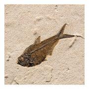 Fossil Tile (Natural) DL88_N167