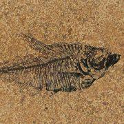 Fossil Tile (Honed) DR48_H101 3