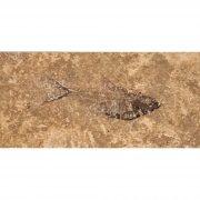 Fossil Tile (Honed) DR48_H109