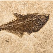 Fossil Tile (Combination) DR48_S202 3