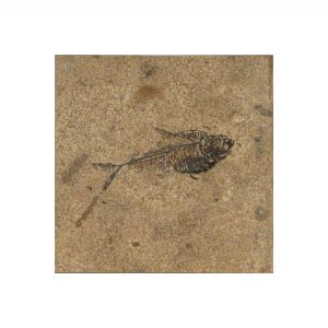 Fossil Tile (Honed) DR66_H029