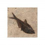 Fossil Tile (Natural) DR66_N150