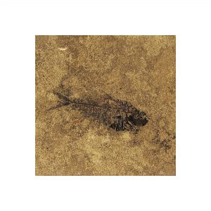 Fossil Tile (Honed) DR88_H066
