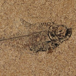 Fossil Tile (Honed) DR88_H114