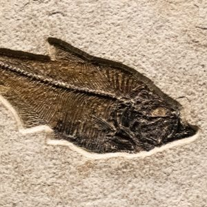 Fossil Tile (Natural) DR88_N168
