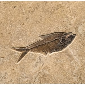 Fossil Tile (Combination) DR88_S223
