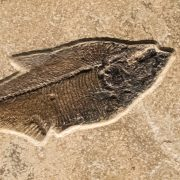 Fossil Tile (Combination) DR88_S223 3