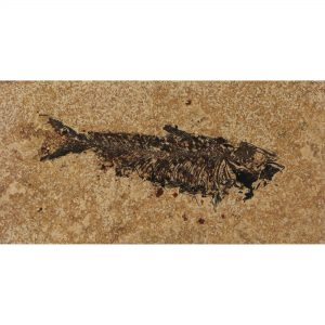 Fossil Tile (Honed) KR48_H080