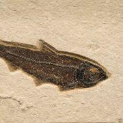 Fossil Tile (Natural) KR48_N209 3