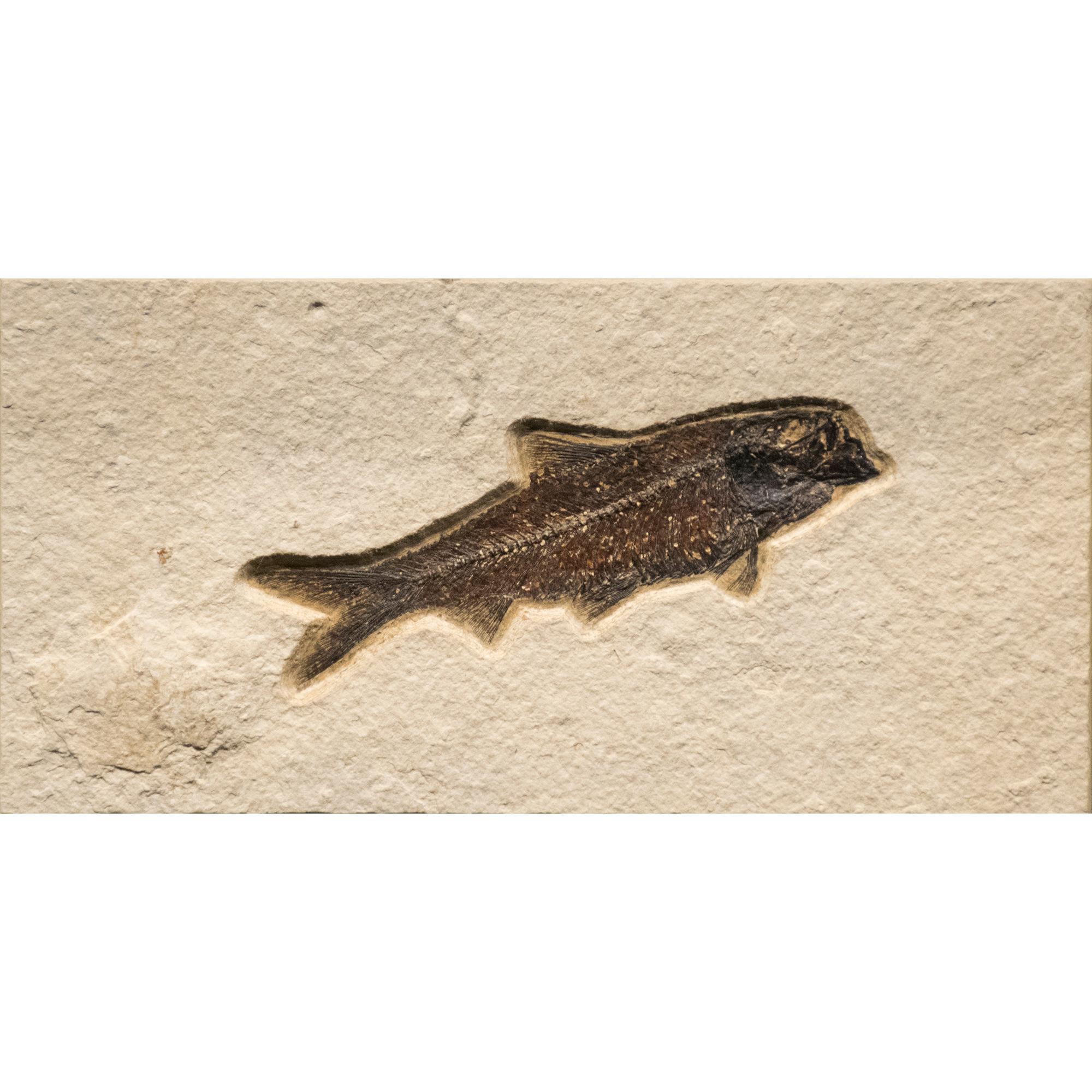 Fossil Tile (Natural) KR48_N210