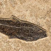 Fossil Tile (Combination) KR48_S227 3