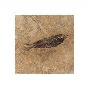 Fossil Tile (Honed) KR66_H126