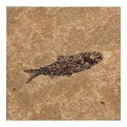 Fossil Tile (Honed) KR66_H129
