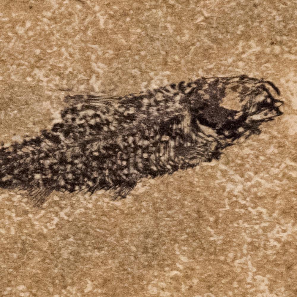Fossil Tile (Honed) KR66_H129