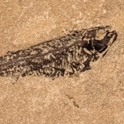 Fossil Tile (Honed) KR88_H105 3