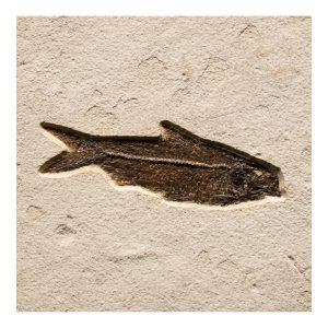 Fossil Tile (Natural) KR88_N169