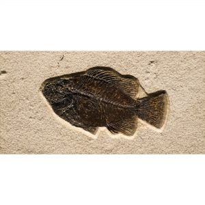 Fossil Tile (Natural) PL48_N218