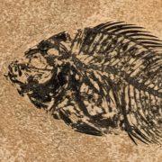 Fossil Tile (Honed) PL66_H132 3