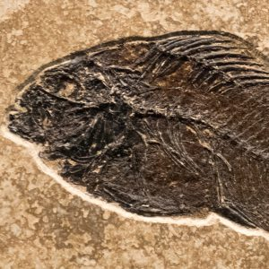 Fossil Tile (Combination) PL66_S222