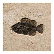 Fossil Tile (Natural) PL88_N165