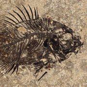 Fossil Tile (Honed) PR48_H115 3