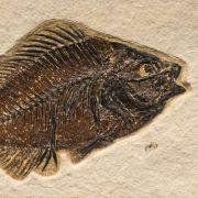Fossil Tile (Natural) PR48_N211 3